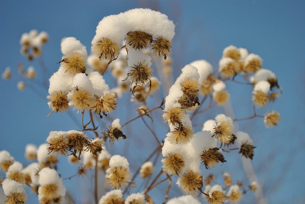 снежные шапочки. Блиц 'Первый снег'