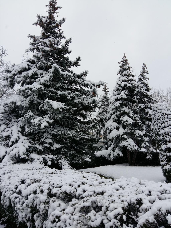 Ноябрь. Снег и у нас снег.. Блиц 'Первый снег'
