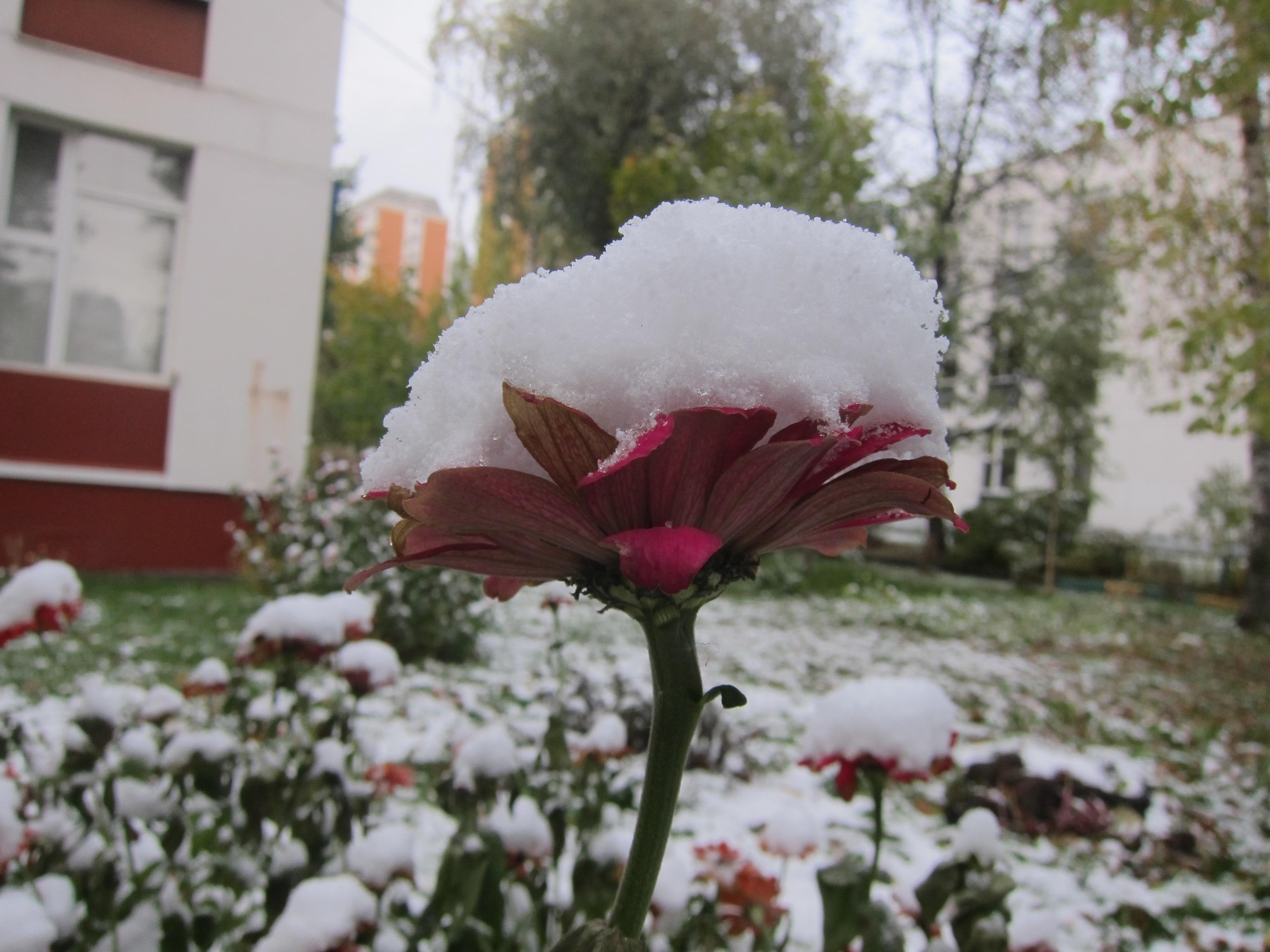 Очень ранний снег 09.09.2015. Блиц 'Первый снег'