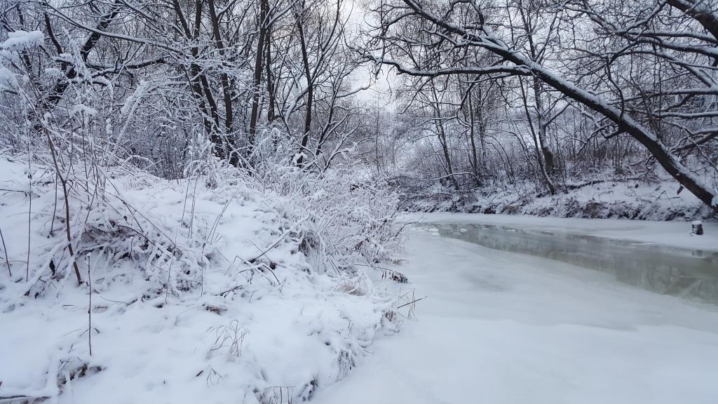 С. Блиц 'Первый снег'
