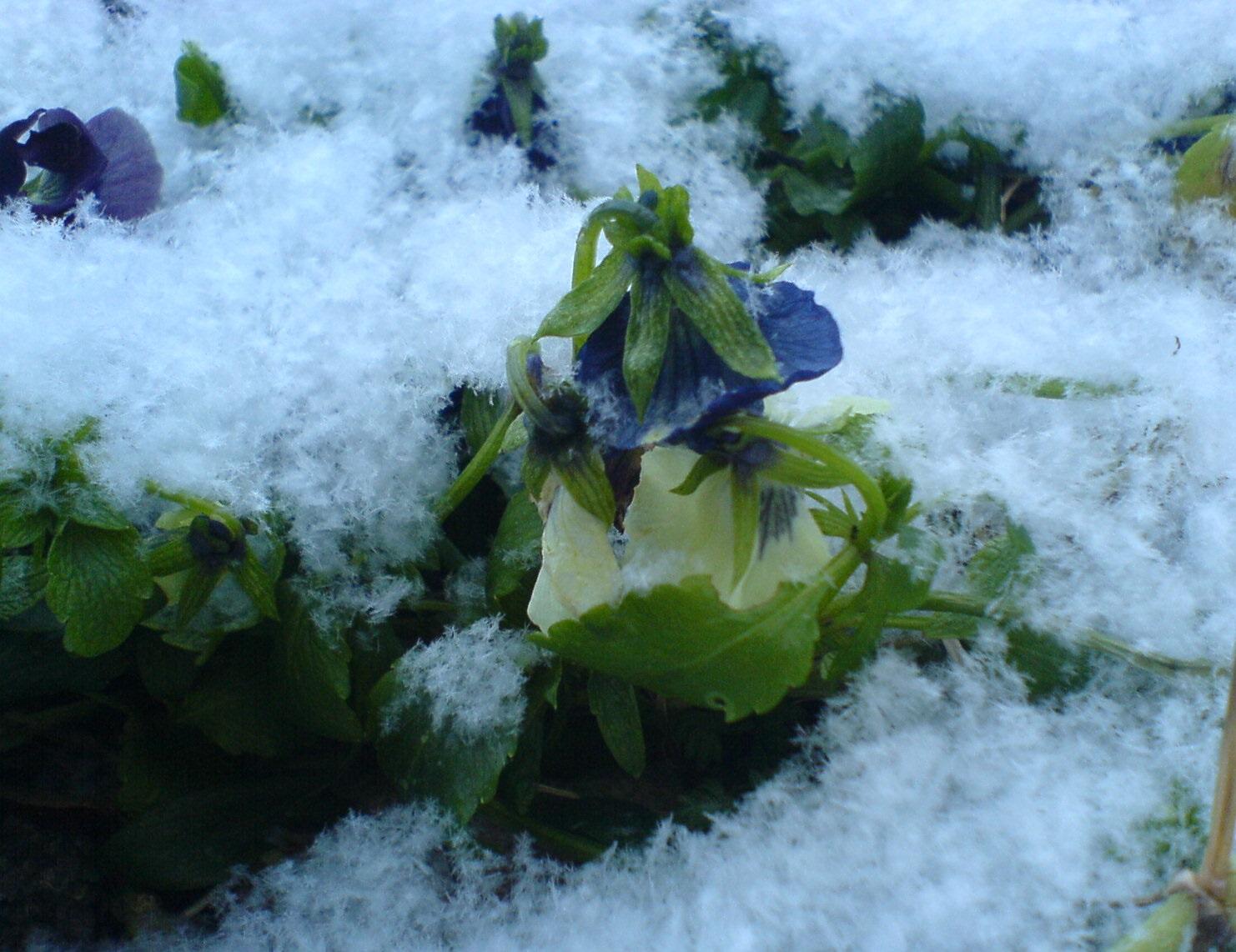 Зима застала нас врасплох.. Блиц 'Первый снег'