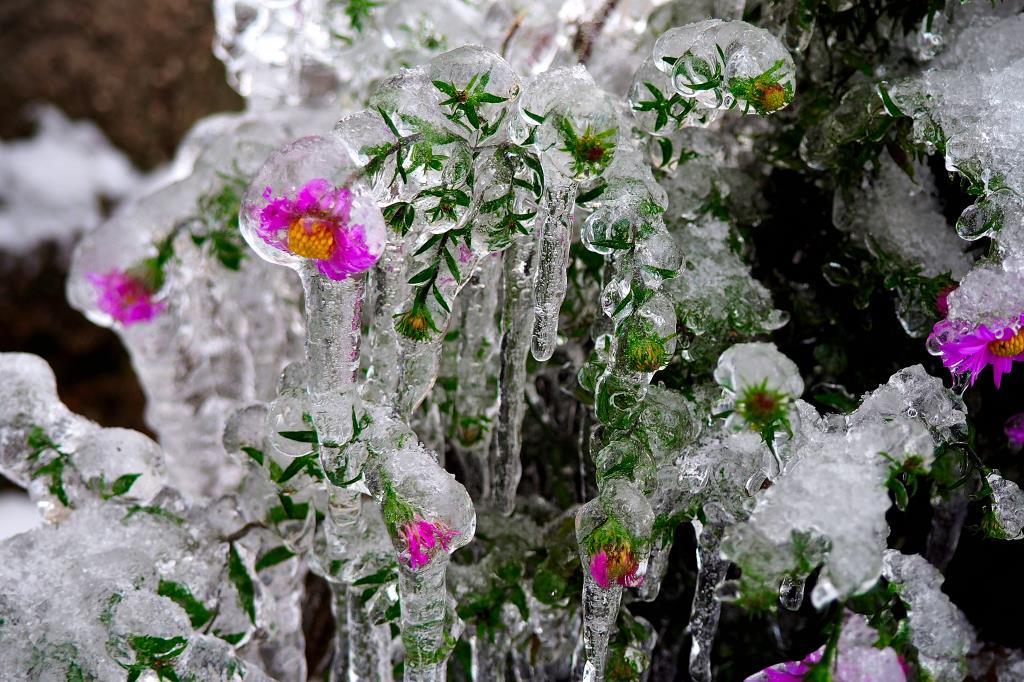 Хрустальные цветы. Блиц 'Первый снег'