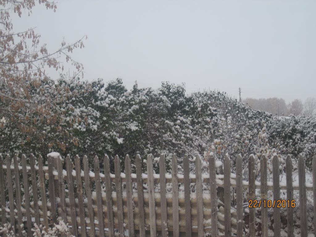Сирень под снегом. Блиц 'Первый снег'