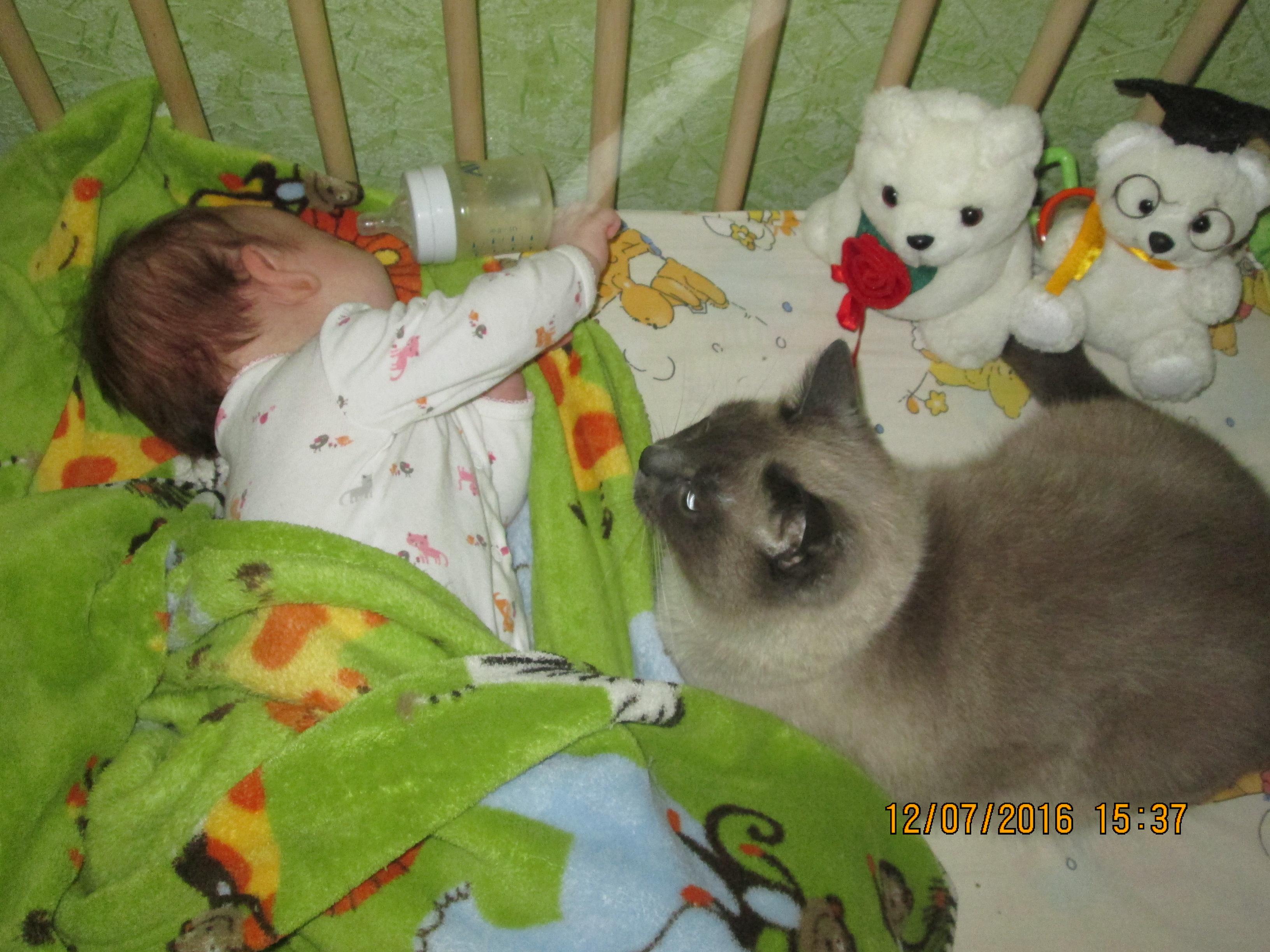 Агата и кот Мольер! . Зверье моё
