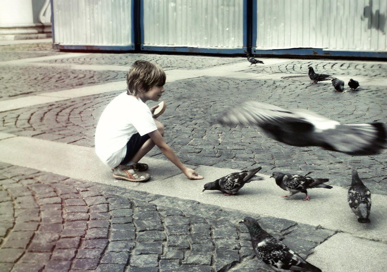 Давайте кормить голубей! . Зверье моё