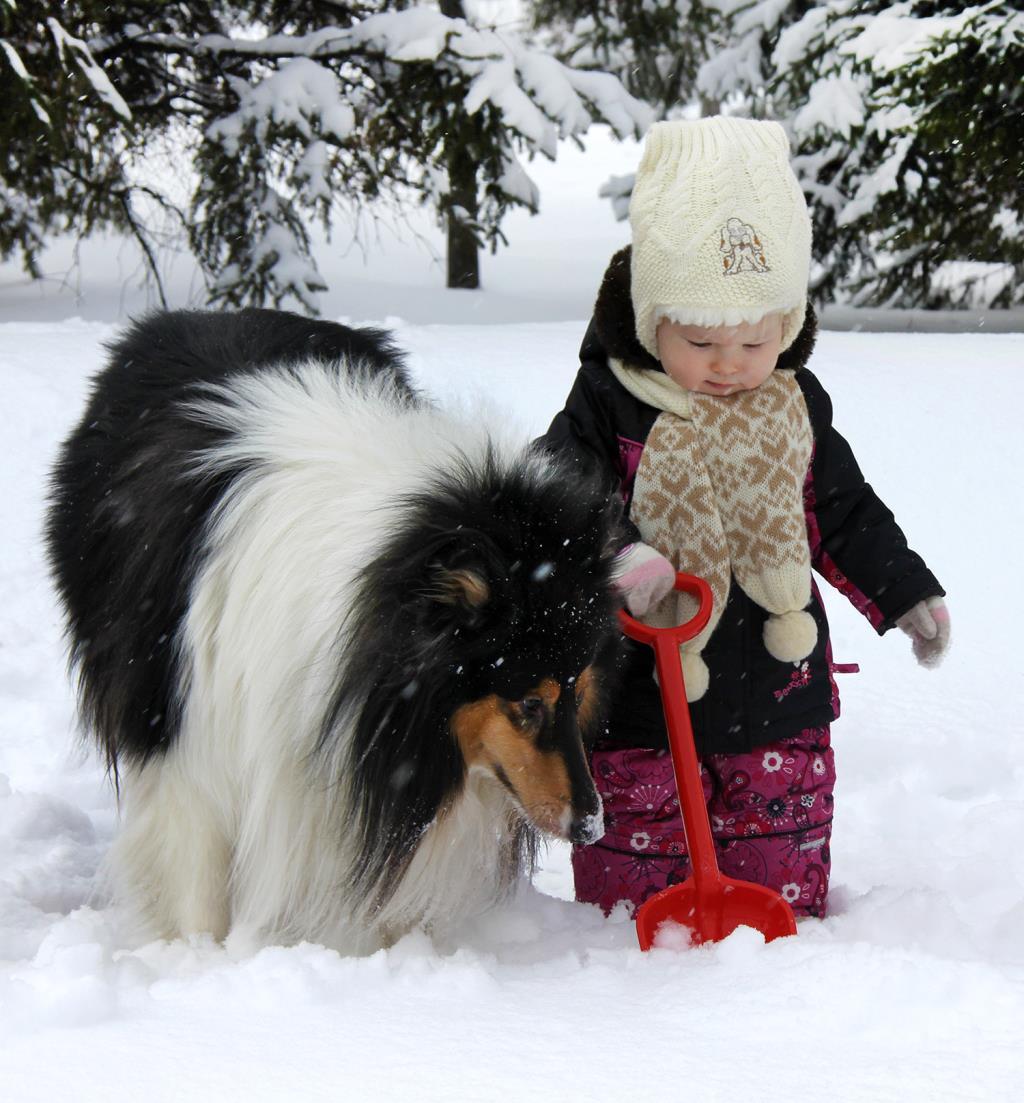 Зимняя прогулка. Зверье моё