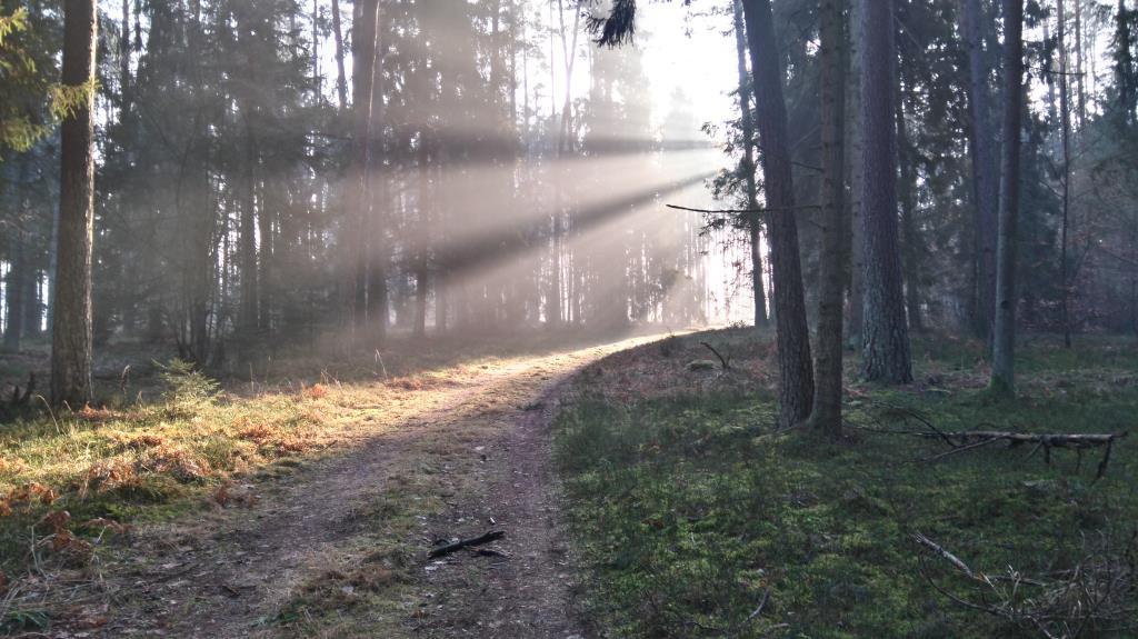 Луч солнца. Лесной пейзаж
