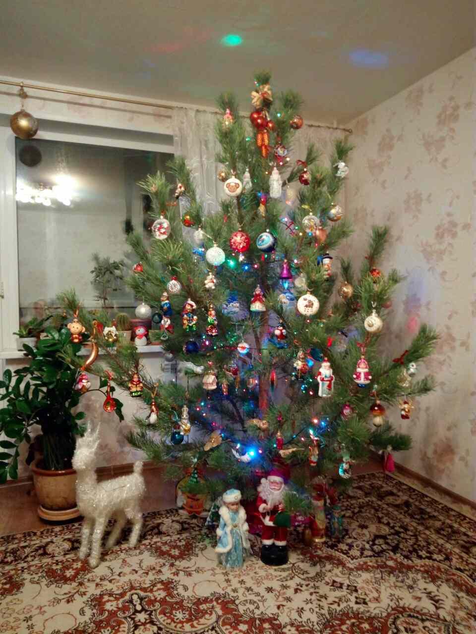 Наша красавица. Блиц: новогодняя елочка