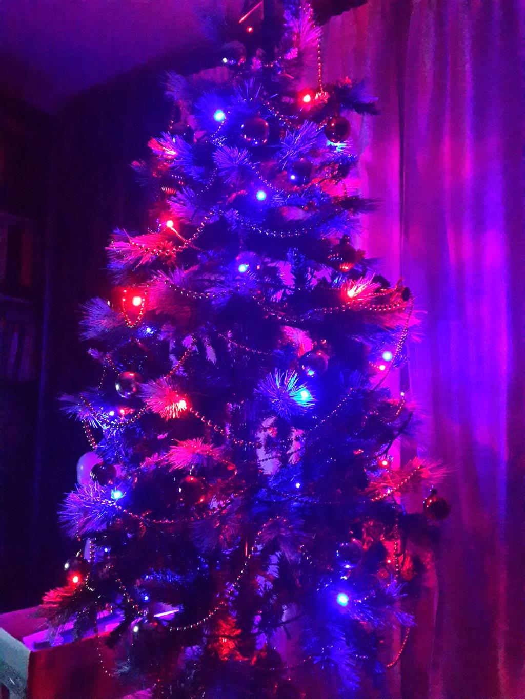 Елочка елка лесной аромат. Блиц: новогодняя елочка