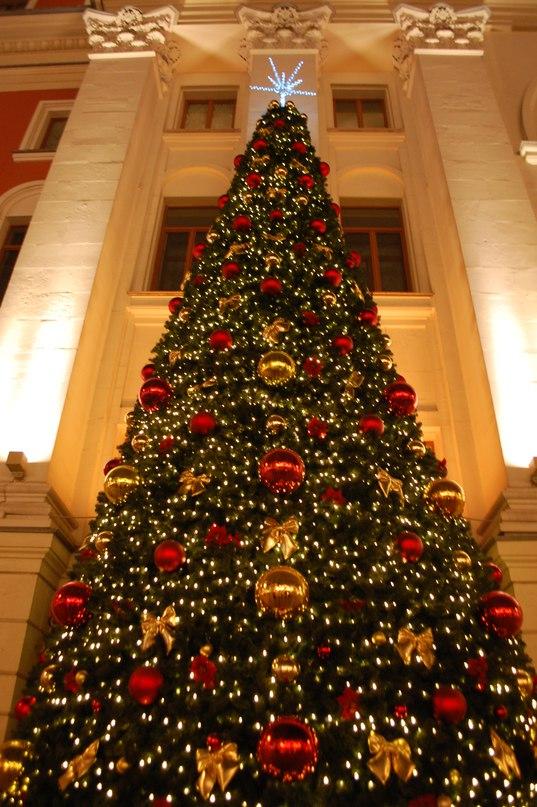 Счастливого Нового года и Рождества!. Блиц: новогодняя елочка
