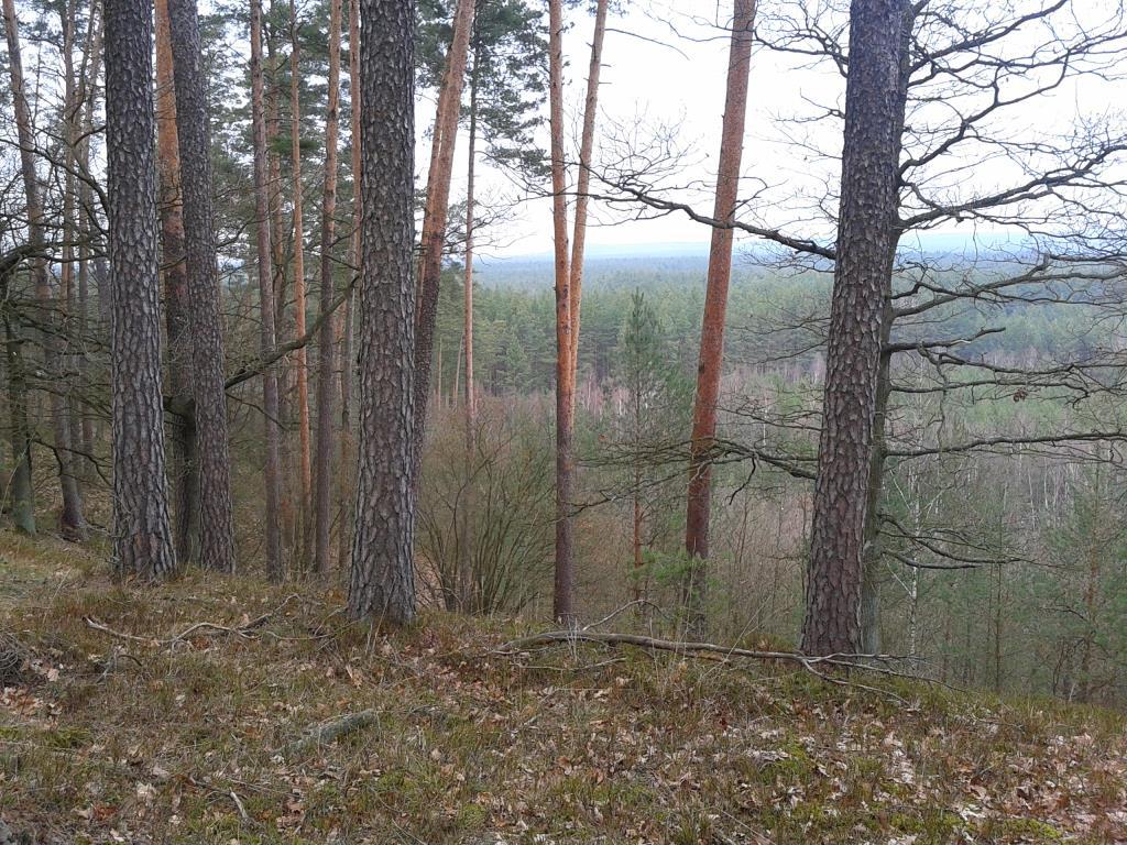 лесные высоты. Лесной пейзаж