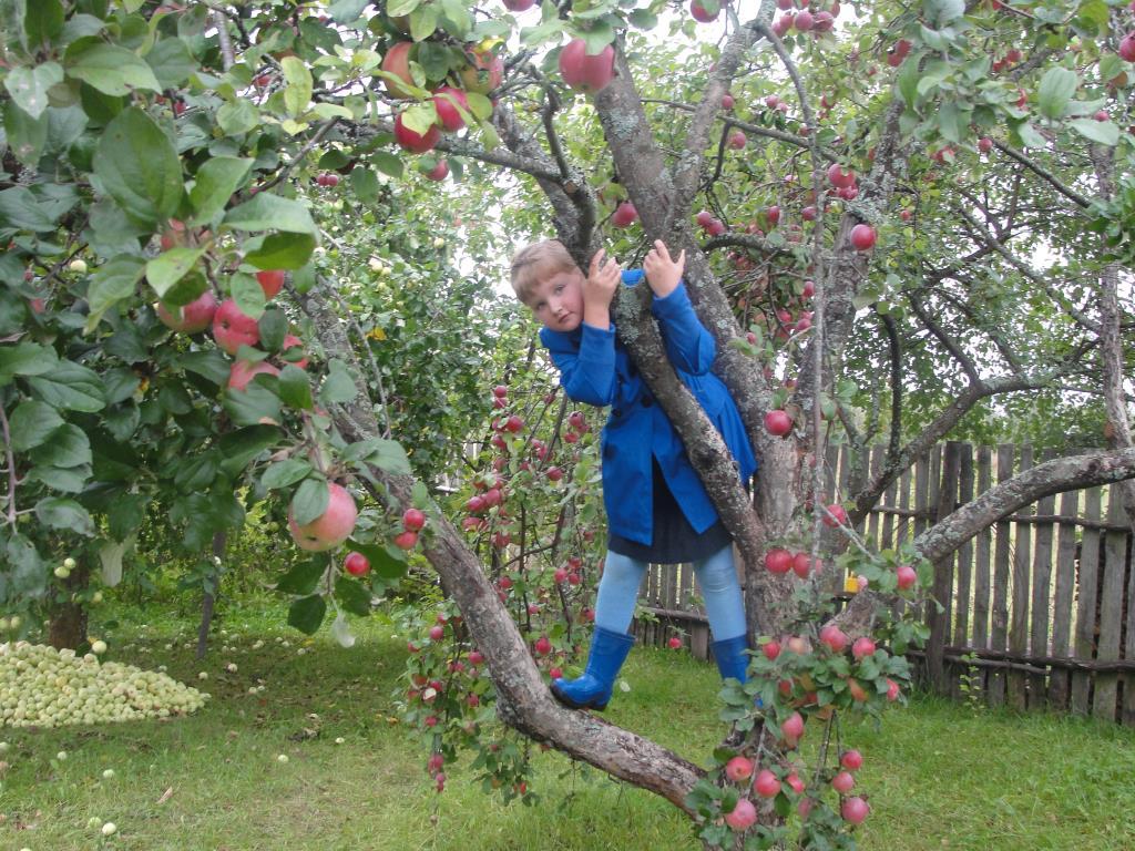 Яблочки!. Дачники и дачницы