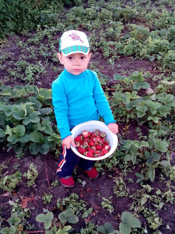Богданчік собрав наш маленькій урожай. Дачники и дачницы