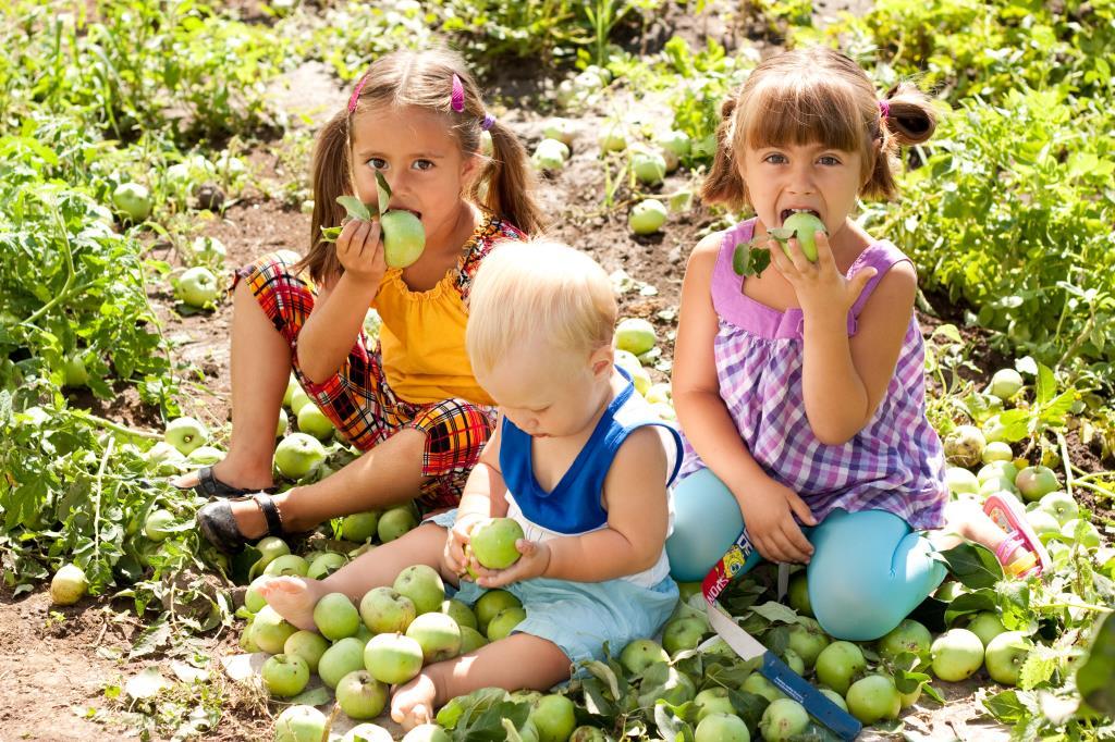 Яблочные посиделки. Дачники и дачницы