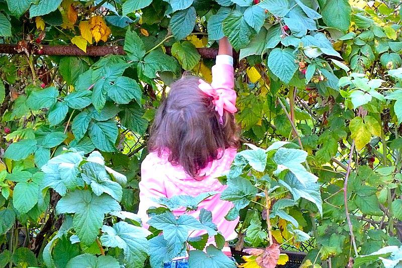 В чужом саду малина вкуснее. Дачники и дачницы