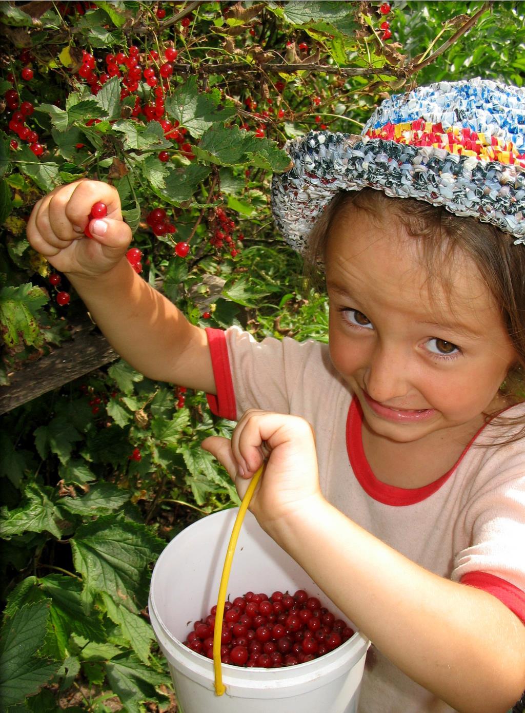 Ягодка за ягодкой.... Дачники и дачницы