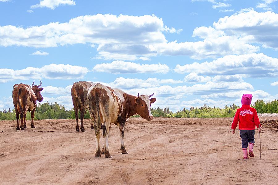 пасем коров. Дачники и дачницы