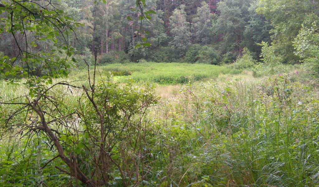 Заросший пруд. Лесной пейзаж