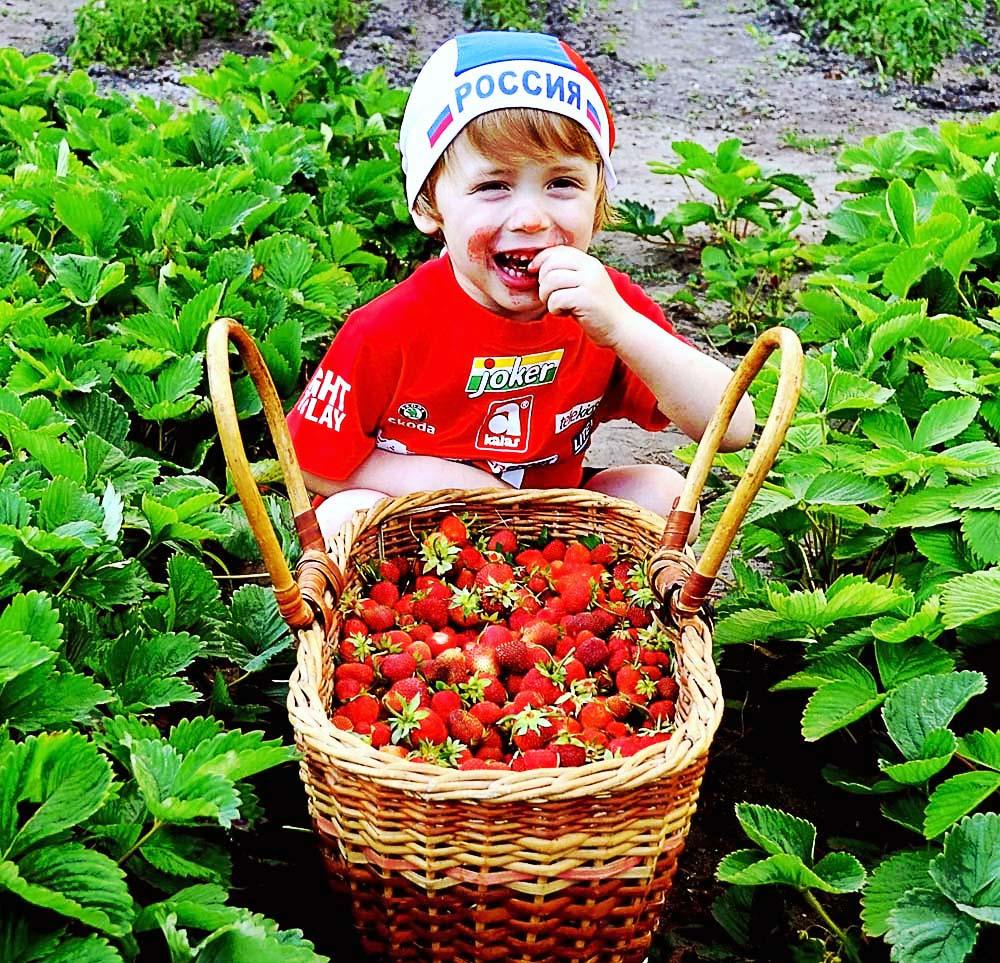 Мегаудачный урожай. Закрытое голосование фотоконкурса «МЕГАуДАЧНОЕ лето»