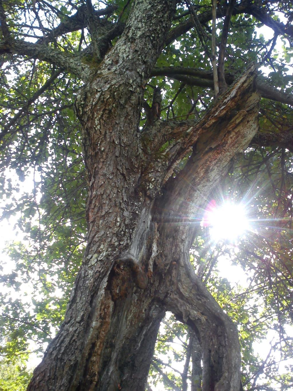 Дряхлый старик на солнце. Лесной пейзаж