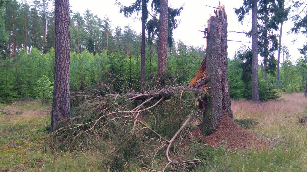 После грозы. Лесной пейзаж