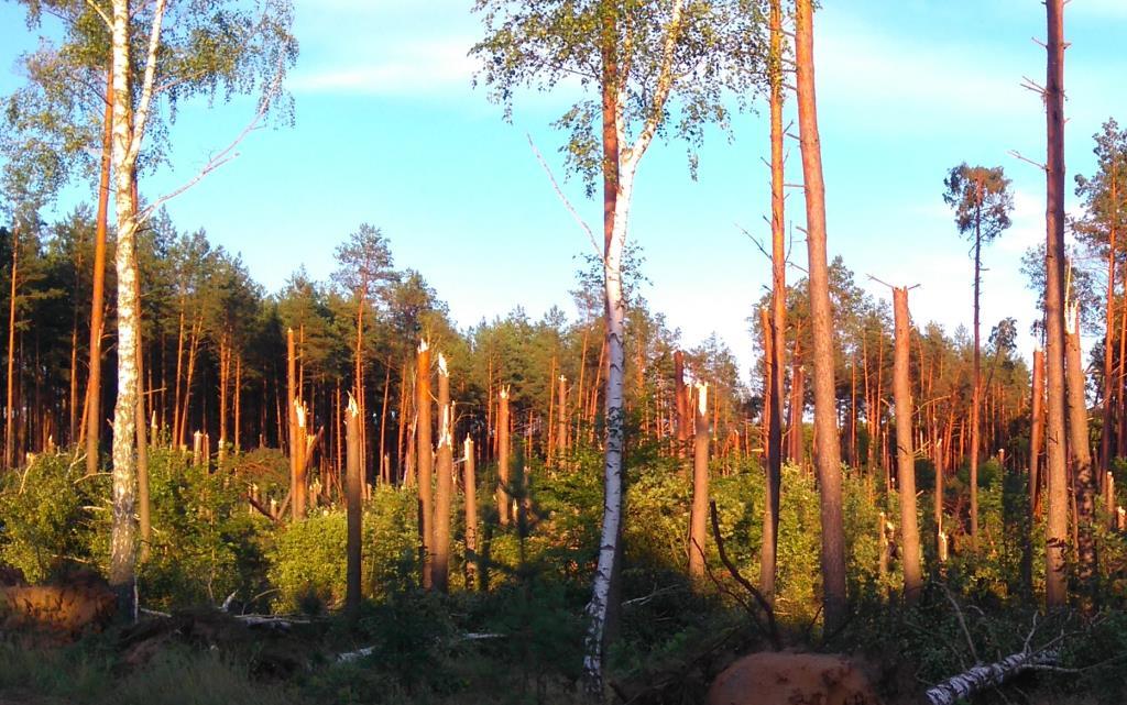 Пейзаж после грозы. Лесной пейзаж