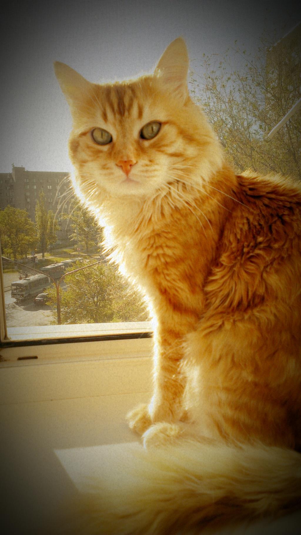 Котик. Блиц: мой питомец