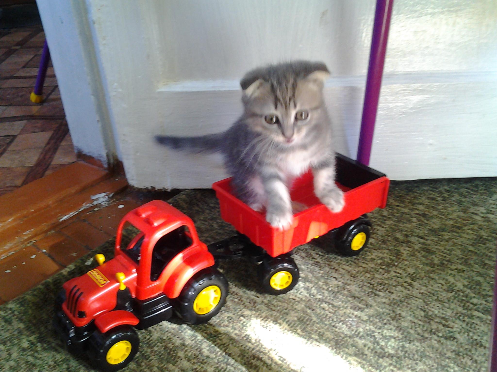 ...красный трактор едет к нам...... Блиц: мой питомец