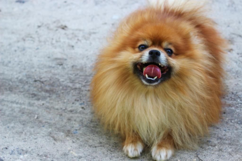Только собака потеет языком и улыбается хвостом.. Блиц: мой питомец