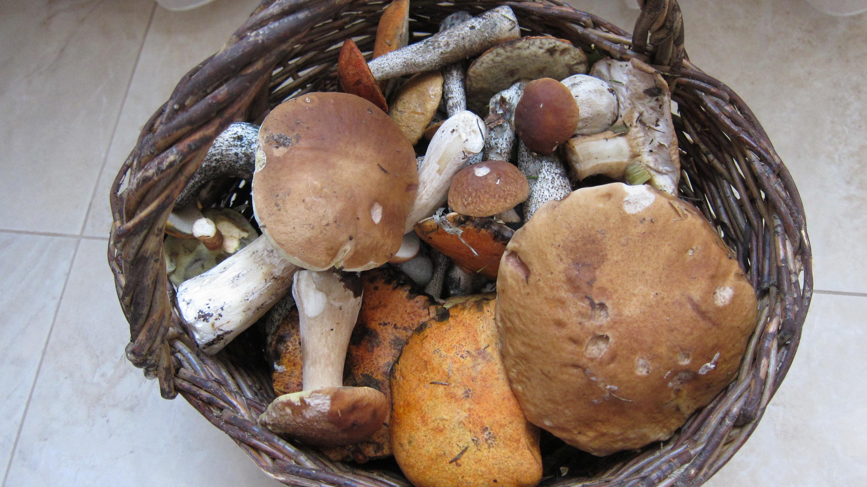 Урожай грибов!!!. Блиц: урожай