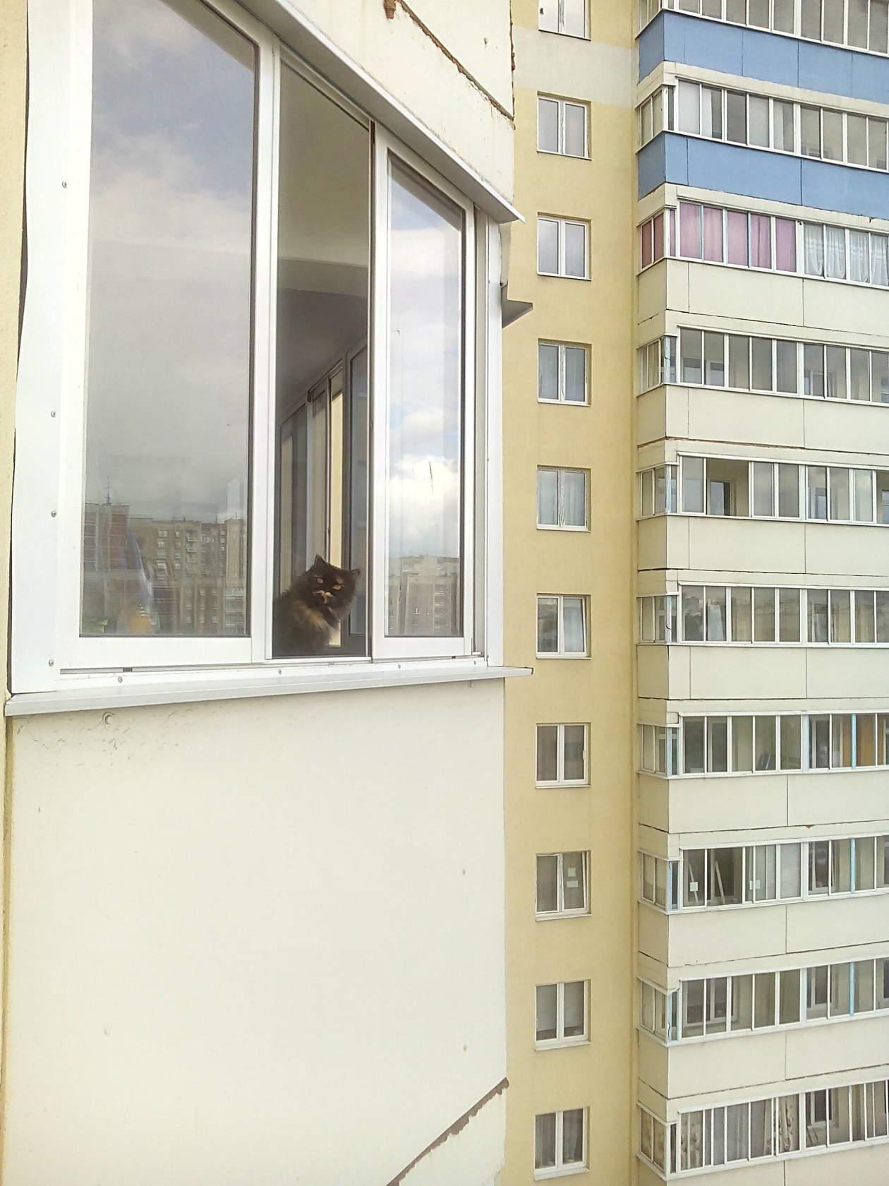 кошкин дом.. Блиц: стены