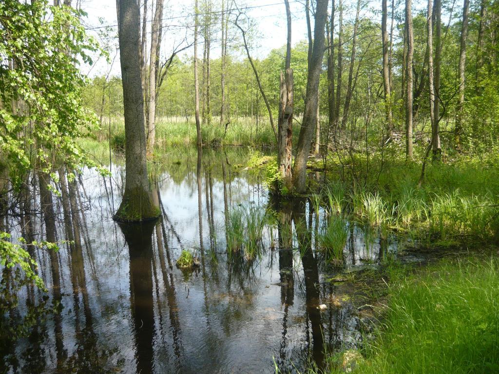Лесной ручей. Лесной пейзаж