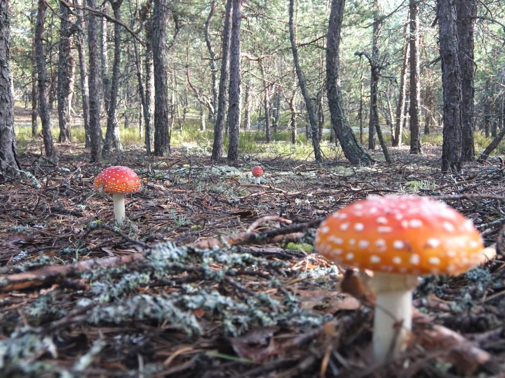 Ведьмин лес. Блиц: грибы