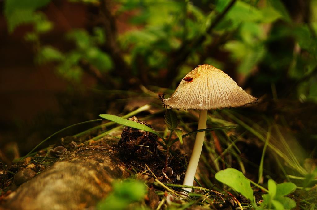 почти белый. Блиц: грибы