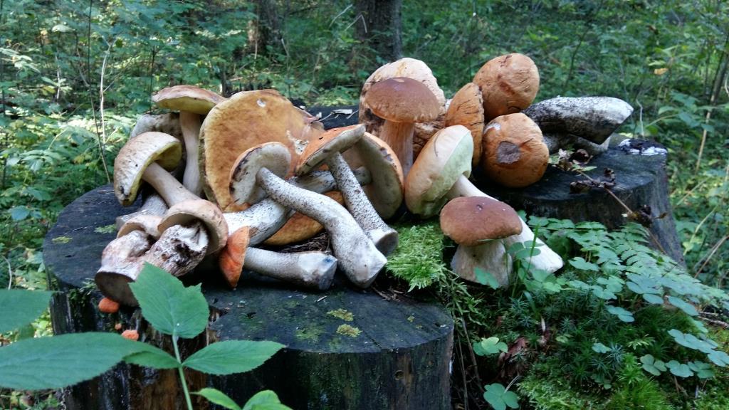 Грибочки . Блиц: грибы