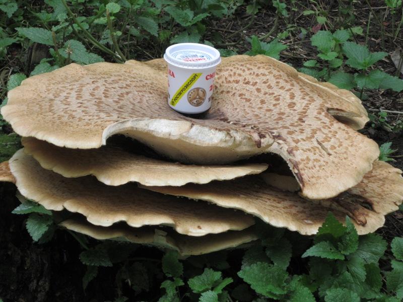 Необычный гриб. Блиц: грибы