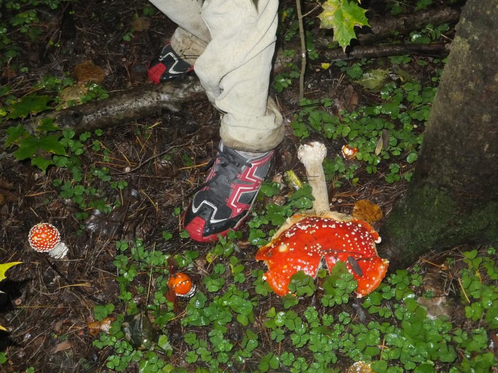 Королевский размерчик.. Блиц: грибы