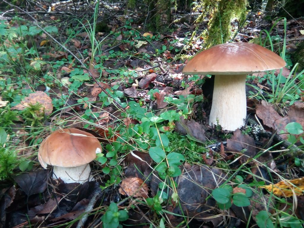 Парочка. Блиц: грибы