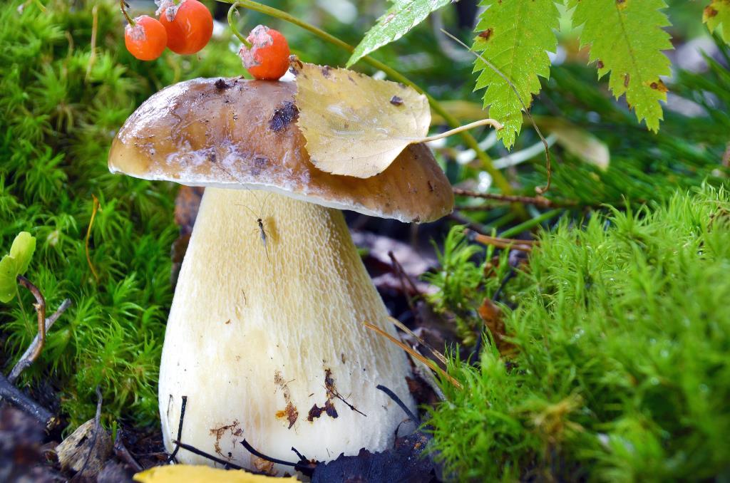 всем с грибочком хорошо.... Блиц: грибы