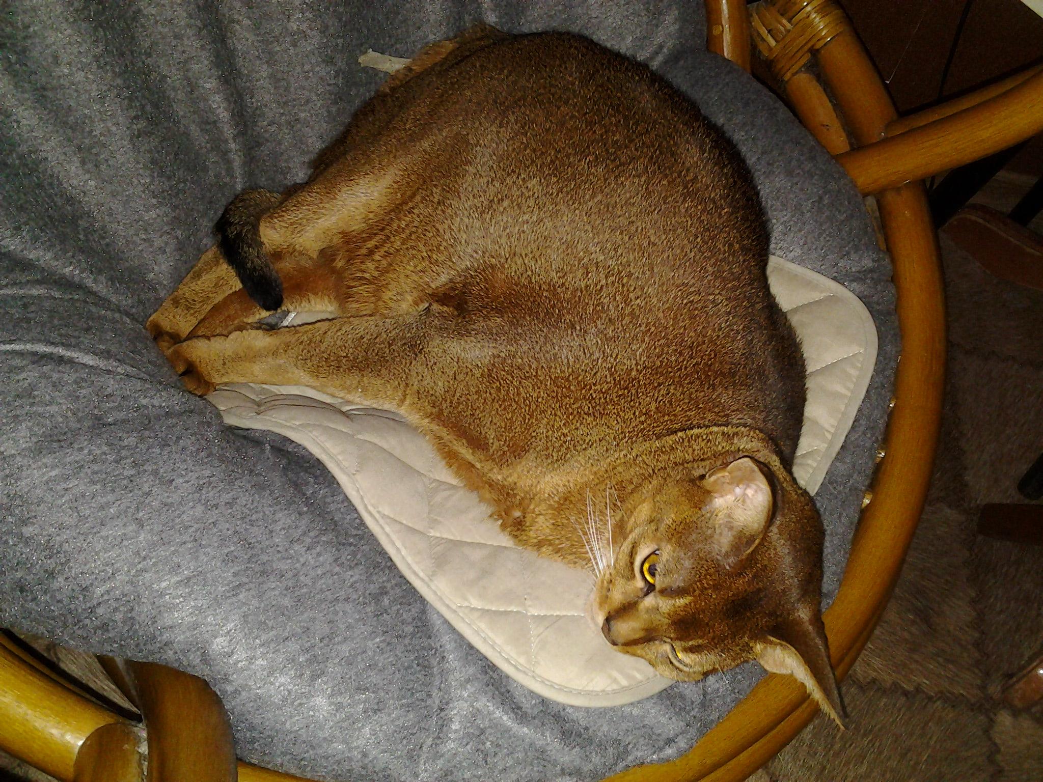 Вегас, мой любимый кот!. Блиц: кошки против собак