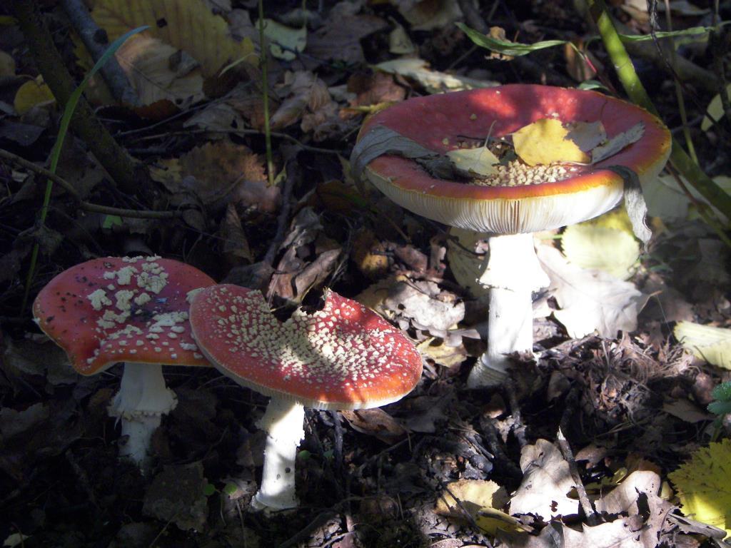 в тенечке.... Блиц: грибы