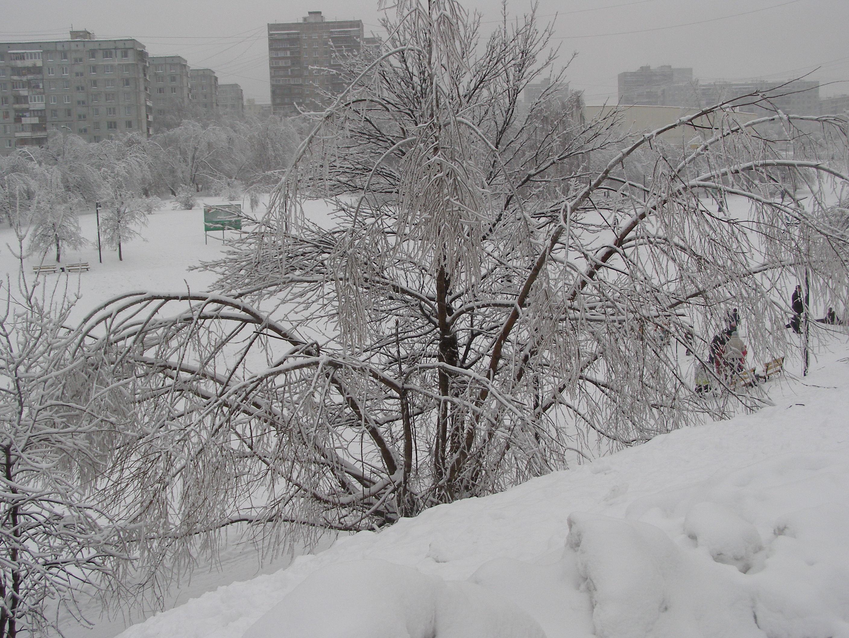 Зима в Подмосковье. Блиц: зима