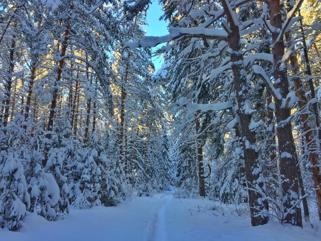 Сказочный лес. Блиц: зима