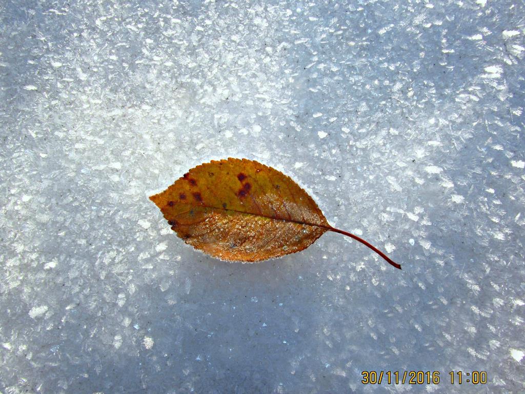красота зимы. Блиц: зима