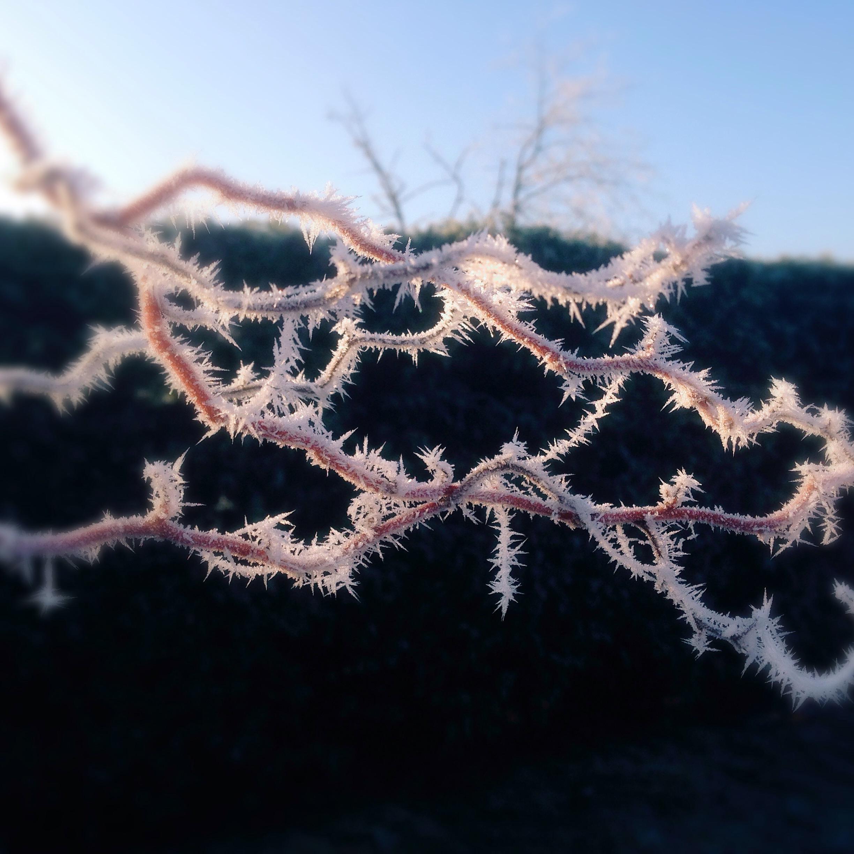 Зимнее утро.... Блиц: зима