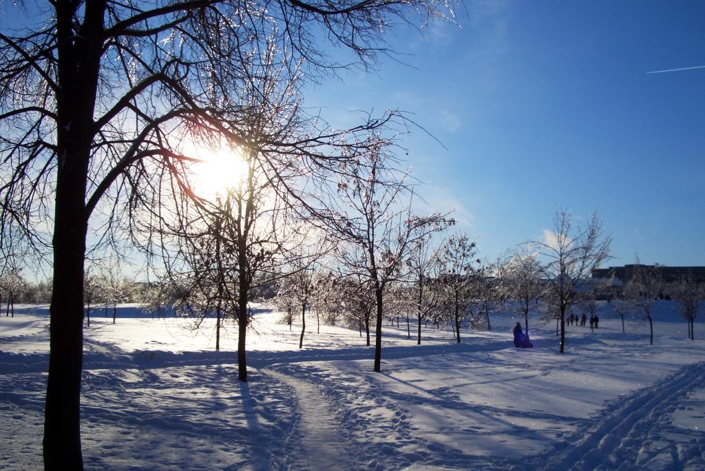 Зимушка-зима. Блиц: зима