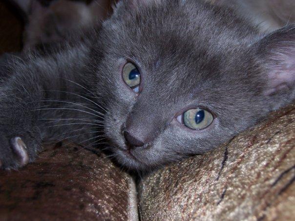 Ох уж эти зеленые глаза!. Блиц: кошки против собак