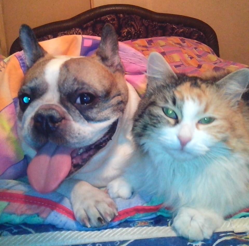 Мои дружные ребятки.. Блиц: кошки против собак