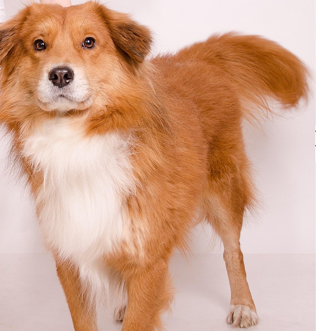 наш любимый пес 'Бес'. Блиц: кошки против собак
