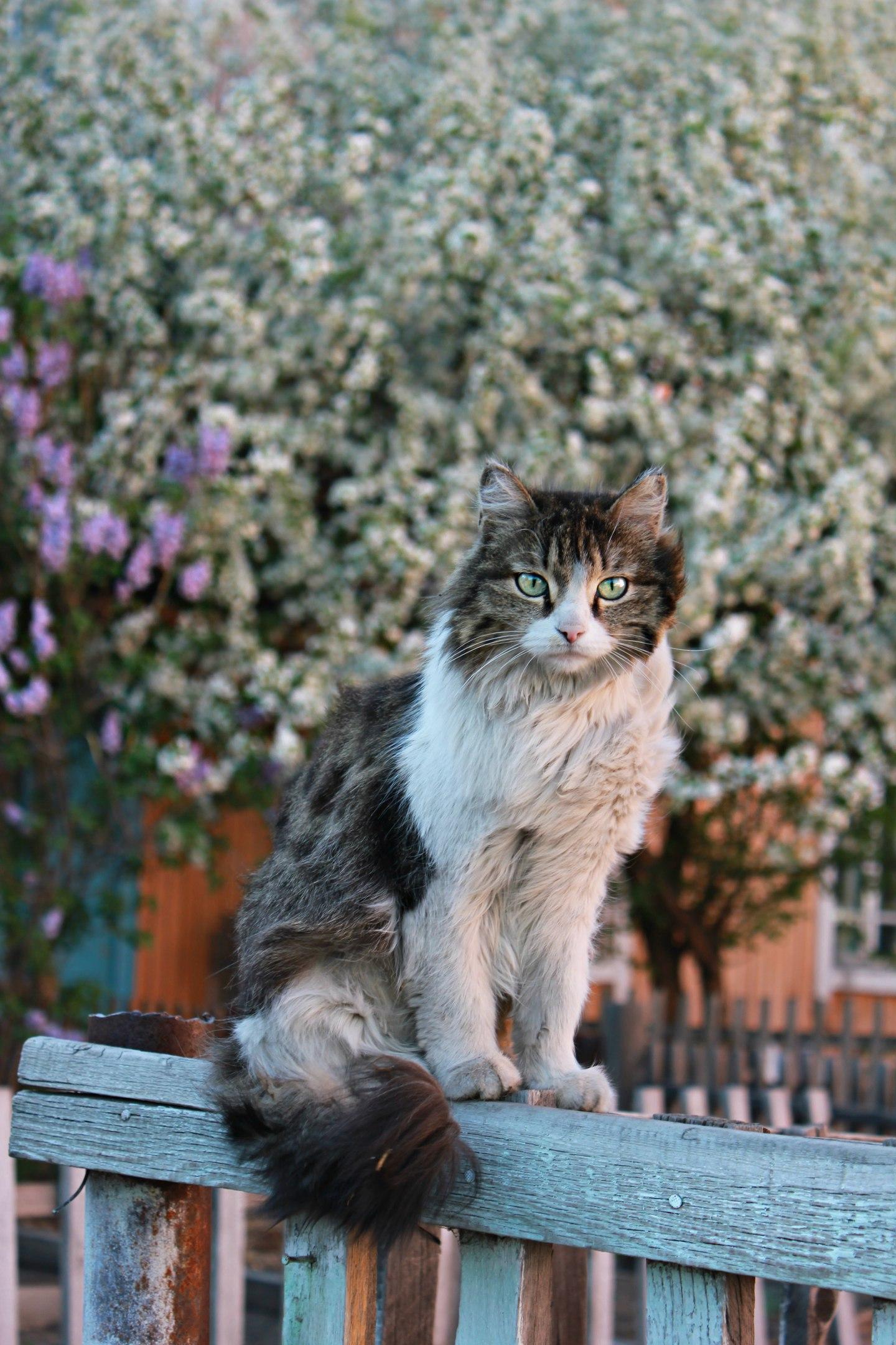 Кот Василий.. Блиц: кошки против собак